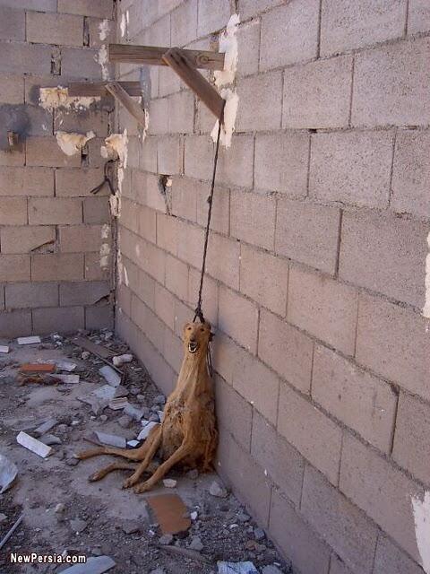 Hunde in Iran