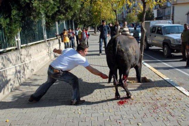 Die Sehne des Kufar-Tiers wird durchtrennt