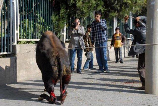 Durch Türken verstümmeltes Tier