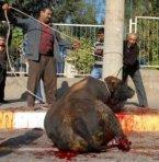 Türken feiern islamisches Opferfest
