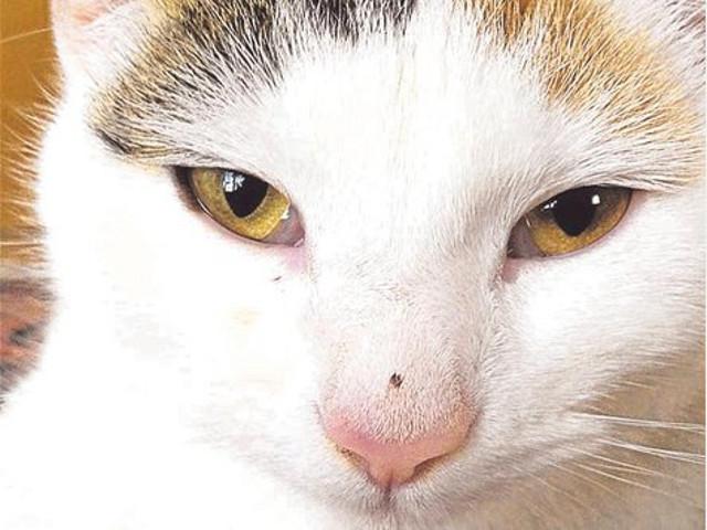 Grausam getötet: Die elf Monate alte Katze Jessica wurde brutal misshandelt. Quelle:tz