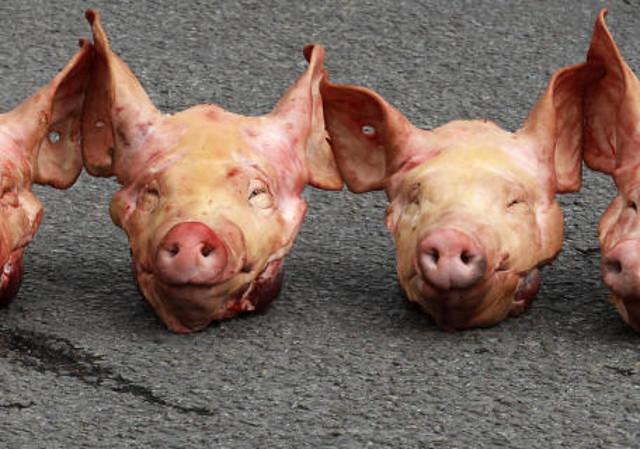 Vor der Moschee Schwein gehabt