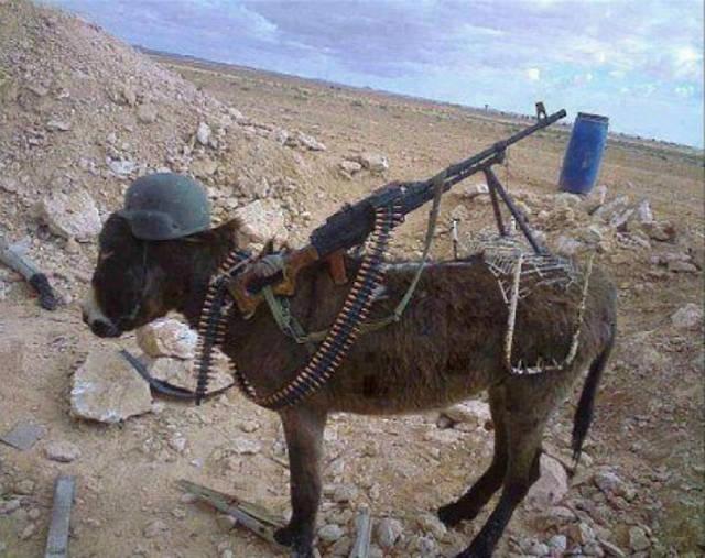 Azeri donkey special forces